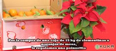 Mesa: https://jardineriakuka.com/naranjas-kuka/5909-naranjas-de-mesa.html#/envases_naranjas-caja_de_15_kg_  Clementina: https://jardineriakuka.com/naranjas-kuka/5996-clementinas.html#/envases_naranjas-caja_de_15_kg_