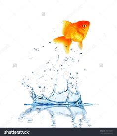 Jumping Fish Out Of Water, Concept Of Challenge. Isolated On White Background Foto Stock 100448257 : Shutterstock