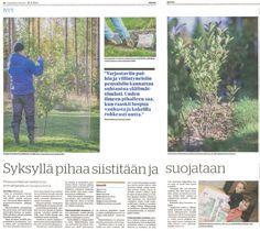 """""""Syksyllä pihaa siistitään ja suojataan"""" Kaleva 26.9.2012. Vinkkejämme pihan suunnitteluun ja syystöihin."""