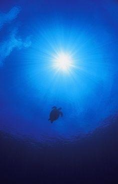 Swimming Sea Turtle - Love this!