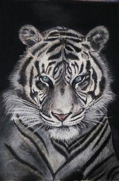 Tigre blanco pintado con pasteles por Susana Blanco