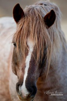 The Red Roan fine art equine photography by WildHoofBeats