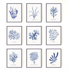 Seaweed print Watercolor painting Chart Blue and white by colorZen