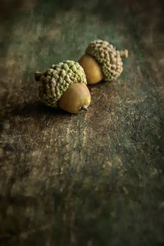 Dan Routh Photography: Acorns on the Table