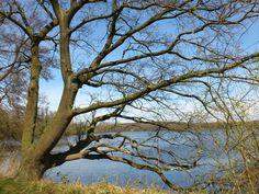 De natuur geeft ons de mogelijkheid om alles van diverse kanten te bekijken. Zoals deze boom, zijde 1