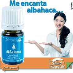 Salud Esencial Propiedades y múltiples usos del Aceite Esencial de albahaca » Salud Esencial