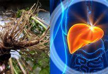 Эти 4 супер мощных средства для очищения печени от токсинов и жиров, особенно необходимы если вы старше 45 лет!