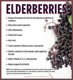 Elderberry Benefits PLUS a Recipe for Elderberry Syrup. I use Elderberry instead of Echinacea. Healing Herbs, Medicinal Herbs, Natural Healing, Holistic Healing, Elderberry Benefits, Elderberry Recipes, Elderberry Syrup Uses, Elderberry Plant, Natural Home Remedies