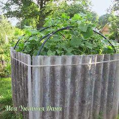 Секретное оружие садовода-огородника