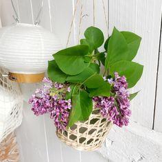 Huussikukista ja huussin kevyestä päivityksestä lisää Oravankesäpesä-blogissa. ♥️ @oravankesapesa #oravankesäpesä #huussikukat  #wckukka  #pursueprettythings  #syreeni #syringavulgaris #lilacs  #frommygarden #springflowerbouquet #trädgårdslycka #allthingsbotanical #gardenlifestyle #allthingsfloral #pursuepretty #botanicalpickmeup #mybeautifulstories #aseasonalyear #howdoesyourgardengrow Planter Pots, Lifestyle, Instagram