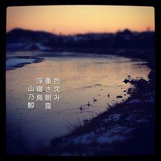 色沈み 重き朝靄 浮寝鳥 [山乃鯨] #photoikku #jhaiku #instagram #俳句 #写真俳句