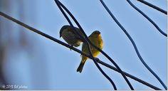 Namoro - Série: Aves...