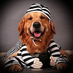 Outrageous Halloween Costumes for Pets: Robber Dog (via Parents.com)
