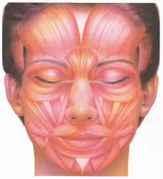 Muscles of facial expression and some exercises------for migraine or myofacsial pain----- trigger points