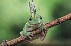 frog-photography-tanto-yensen-6