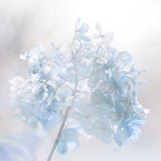 ~Blue Cottage Charm~