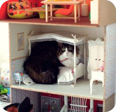 "Look who i found in the dollhouse! ~ ""She chose the bed (I always said that this cat was very clever), not the living room or the bedroom floor, THE bed!!"""