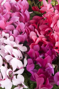 Ture Love, Go Green, Amazing Flowers, Random Stuff, Gardening, Mood, Iphone, Ideas, Plants