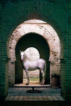 La belleza del caballo andaluz #Caballos #Horses                                                                                                                                                                                 Más