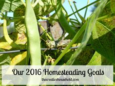 Our 2016 Homesteading Goals