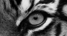 Δεξί X-Trem(i): Τα μάτια δεν λαμβάνουν μόνο οπτικά ερεθίσματα -Κάνουν και 14 πράγματα που δεν θα τα πιστεύετε [εικόνες gif]