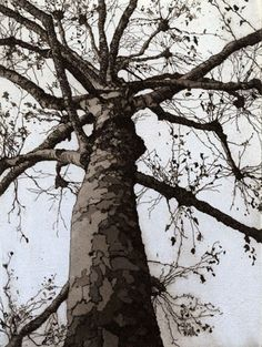 Chrissy Norman London Plane