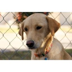POLLY   The Humane Society of Dallas   Dallas, Texas   Pets.Overstock.com