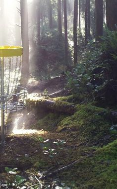 Wilder Disc Golf Course   Travel   Vacation Ideas   Road Trip   Places to Visit   Newport   OR   Forest   Hiking Area   Scenic Point   Other Sporting Facility
