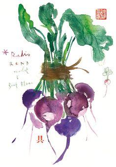 botanical-plates5