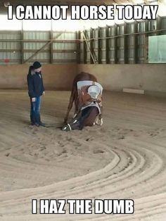 """Funny Horse humor quote! """"I cannot horse today, I haz the dumb."""" Horse looking pretty dumb with his head falling down to the ground. Look at the lady just looking at him! lol."""