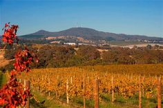 Mt Canobolas & Vines. I was pleasantly surprised by what Orange had to offer in terms of food and wine. And of course the leisurely walk through Cook Park