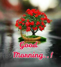 Good Morning Images For Whatsapp Good Morning Images Hd, Good Morning My Love, Good Morning Picture, Morning Pictures, Good Morning Quotes, Quotes For Whatsapp, Butterfly Wallpaper, Believe In God, The Thing Is