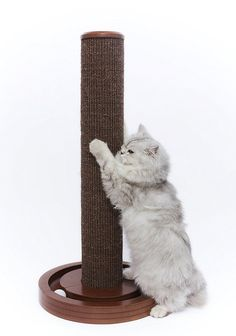 Merry Pet Merry Pet Cat Scratching Post with Round Ball Toy Base ** Discover this special cat product, click the image : Cat scratching post