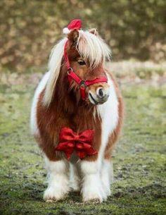 Eine Auswahl interessanter und lustiger Bilder – JFA UNIjuntos – – Подборка интесных и веселых картинок Eine Auswahl interessanter und lustiger Bilder - Animals and pets Most Beautiful Horses, Pretty Horses, Horse Love, Animals Beautiful, Cute Baby Horses, Poney Miniature, Miniature Ponies, Cute Little Animals, Cute Funny Animals