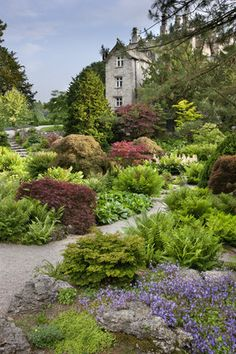 The Rock Garden in June at Sizergh Castle, near Kendal, Cumbria,UK The rock garden covers almost an acre and is closely planted with dwarf conifers, Japanese Maples and hardy ferns