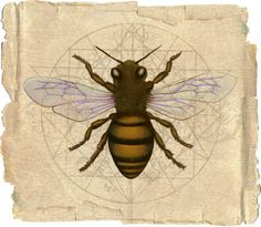 beeherenow1.jpg (750×653)