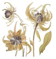Angie Lewin 'Calendula Study I' watercolour http://www.angielewin.co.uk/collections/original-work/products/calendula-study-1
