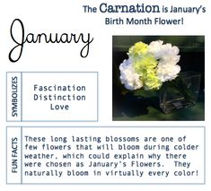 birth month meanings love January Birthstone And Birth Flower: Meaning and Significance January Birth Flowers, Birth Month Flowers, Giving Flowers, Happy Flowers, Birth Month Meanings, Astrology Planets, Month Signs, January Baby, Capricorn Facts