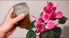 Je to také jednoduché a pritom také efektívne.Ak chcete mať na jar krásne zakvitnuté izbové rastliny, polejte ich ešte vo februári touto výživou podľa návodu z youtube.Potrebujeme:cibuľové šupky0,5 l vody2 PL sušeného droždiaPostup:Cibuľové šupy vložíme … Garden Plants, Ethnic Recipes, Flowers, Food, Youtube, Indoor House Plants, Lawn And Garden, Essen, Meals