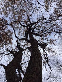 Good night, dear trees! Sweet slumber.