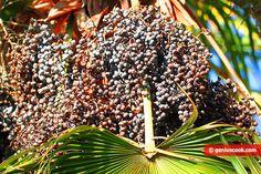 Olio di Palma Benefico o dannoso