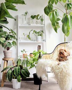 Tropical House Plants, House Plants Decor, Plant Decor, Dog Room Decor, Common House Plants, Low Light Plants, Dog Rooms, Green Life, Outdoor Plants