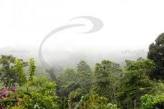 Beautiful misty view of western ghat forest