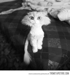 This is the best I wanna buy a cat just so I can cut its hair like this!