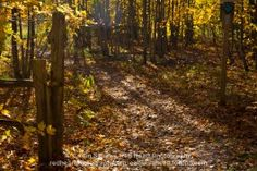 From a shoot at Mono Cliffs Provincial Park in Ontario. Heart Photography, Nature Images, Ontario, Hiking, Park, Gallery, Plants, Red, Walks