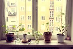 I find it extremely important for one to see a growing green upon waking up.