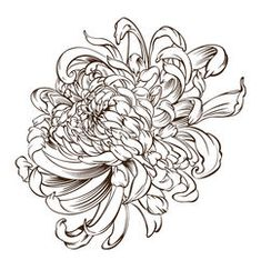Find Japanese Flower Tattoo Chrysanthemum Flower Blossoms stock images in HD and millions of other royalty-free stock photos, illustrations and vectors in the Shutterstock collection. Japanese Chrysanthemum, Chrysanthemum Flower, Japanese Flowers, Japanese Flower Tattoos, Chrysanthemum Drawing, Floral Back Tattoos, Tattoos For Women Flowers, Ant Tattoo, Doodle Tattoo