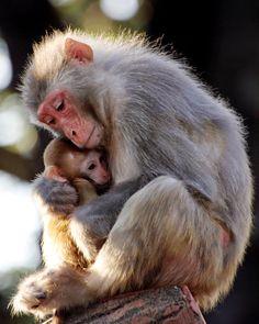 Gabriel spank the monkey remarkable, very
