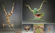 The dance of death: Male praying mantises dance seductively to attract a mate.who will later bite their heads off Dance Of Death, Bust A Move, Praying Mantis, Strictly Come Dancing, Beautiful Creatures, Bodies, Attraction, Butterflies, Insects