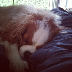 my little naptime buddy.